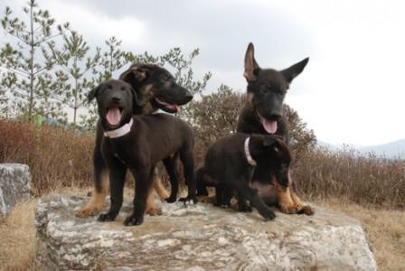 clone dogs