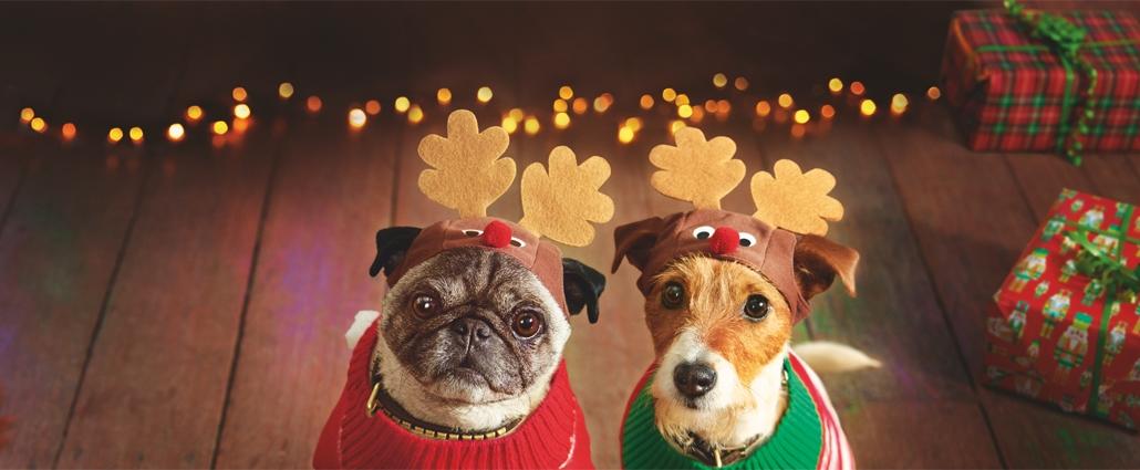 Asda Dogs
