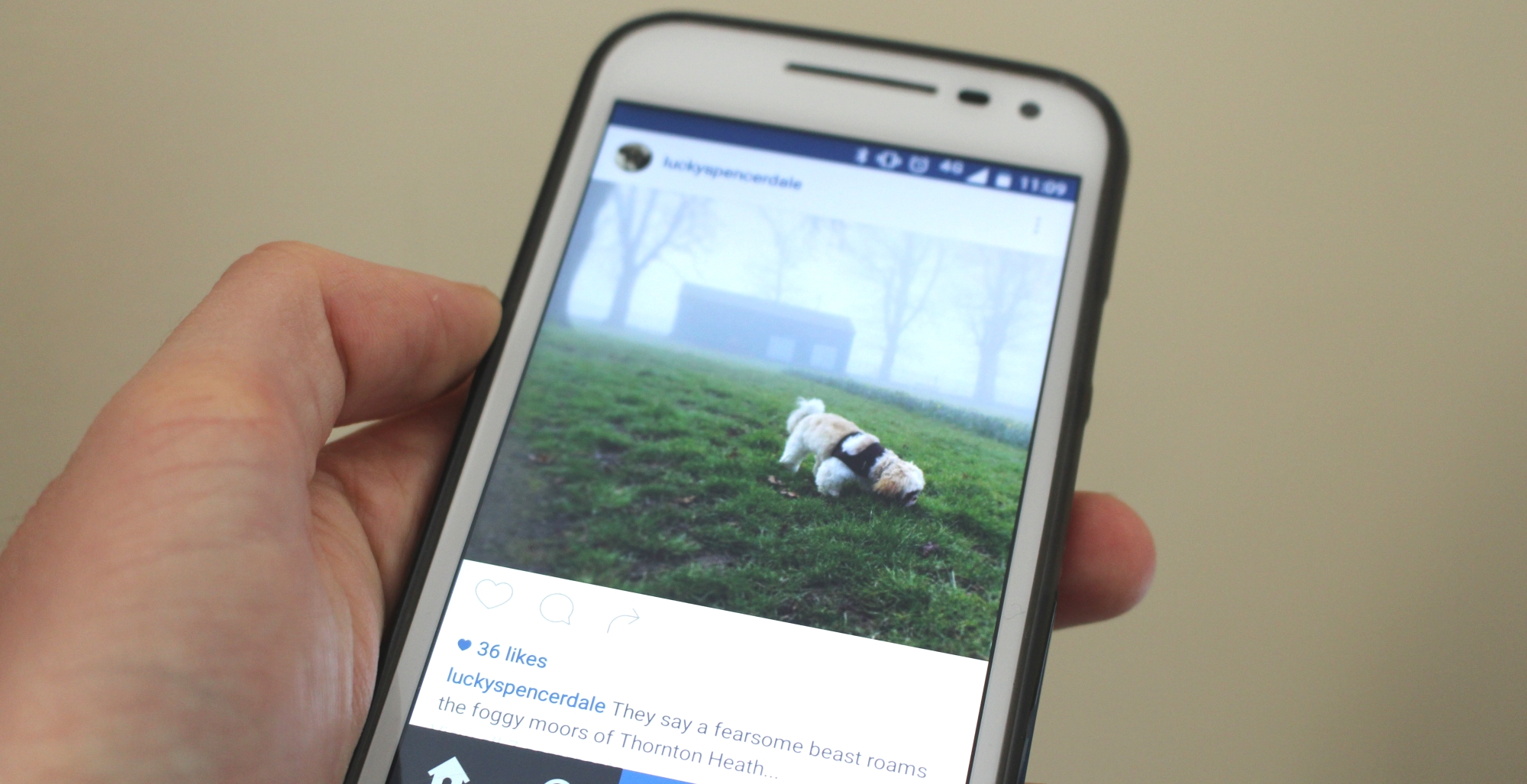 Instagram Reordering Chronological Feed