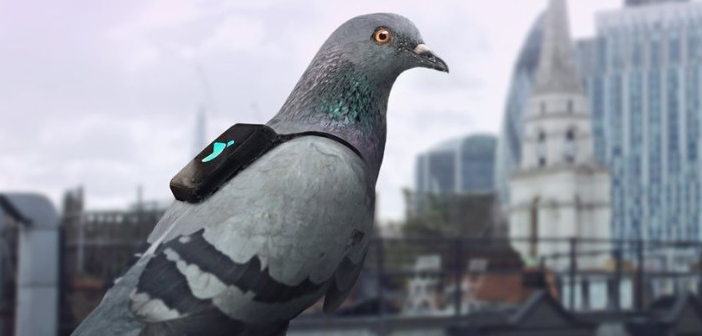 Innovation Lab: Smart Pigeons, Minecraft Concerts and Pizza Robots