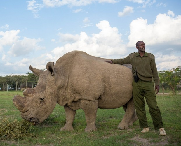 Tinder wants you to swipe right to help save the nothern white rhino
